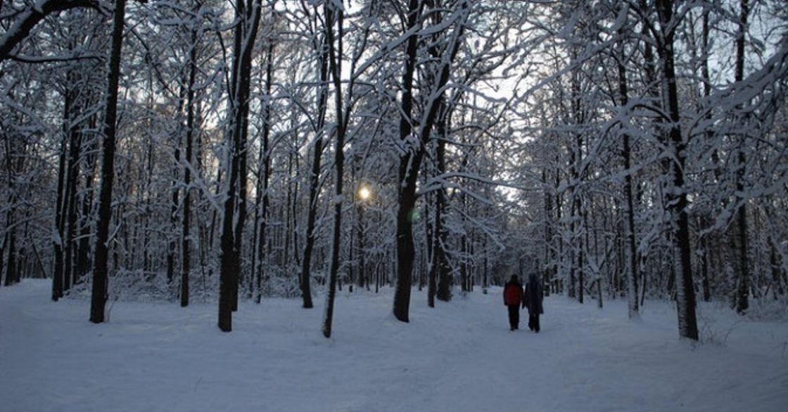 Картинки самый красивый сад зимой