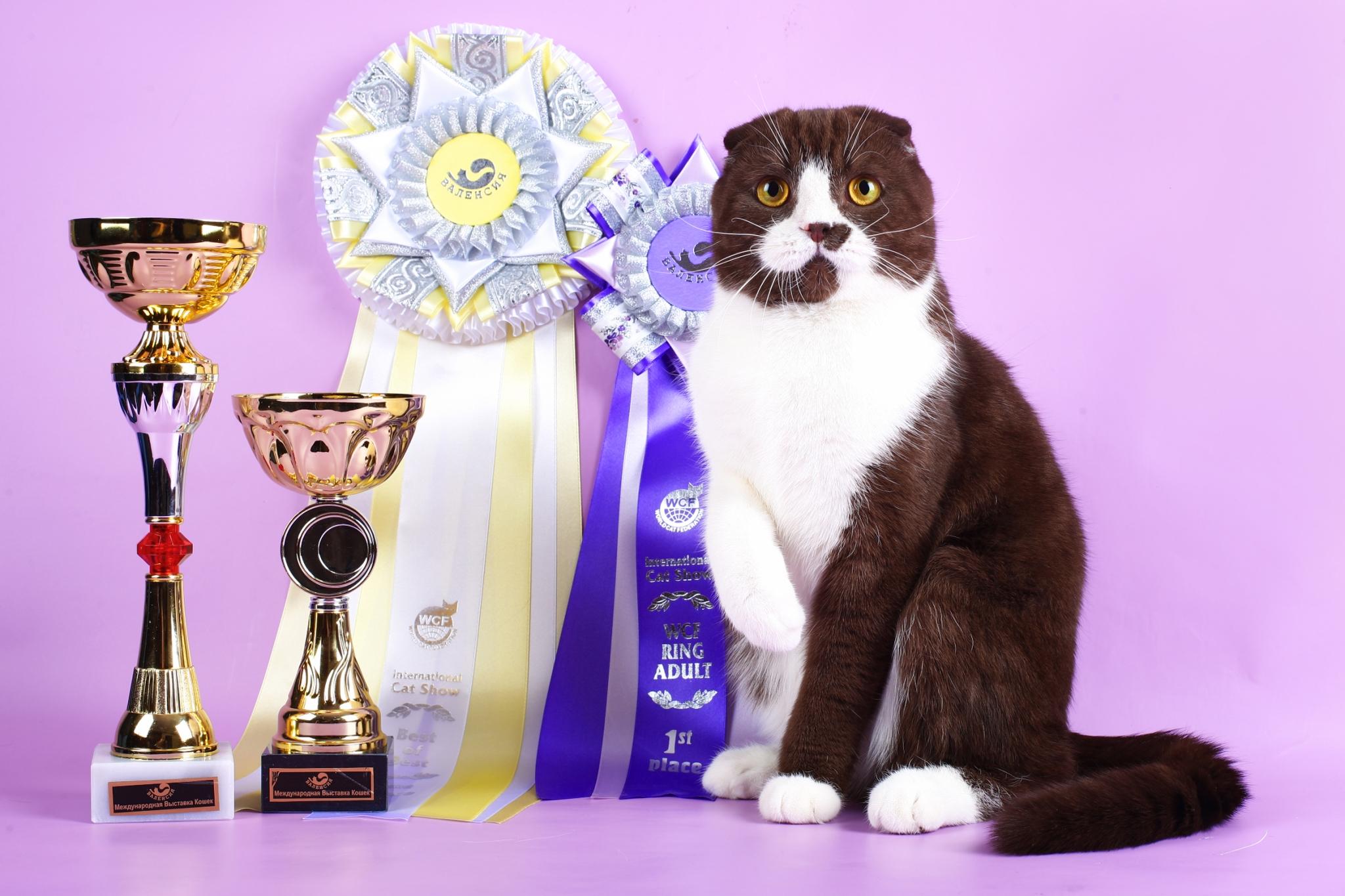 Мистер кот в сокольниках