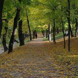 Возле метро «Пятницкое шоссе» разбили парк