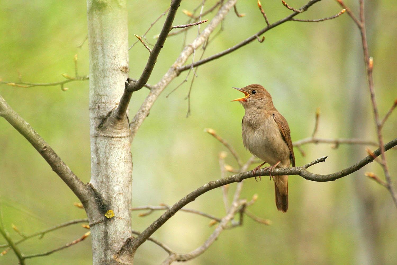 картинки птицы в весеннем лесу парфюма оригинальные сердечные
