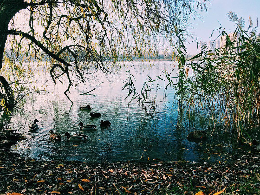 Парк Солнечный остров, КРАСНОДАР | 810x1080