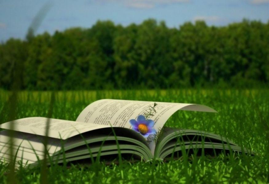 Картинки по запросу лето с книгой