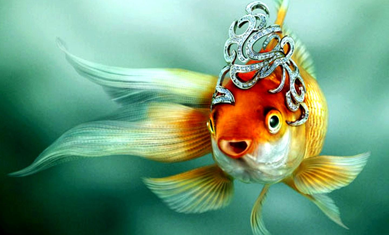 Форель запеченная в фольге Золотая рыбка  кулинарный
