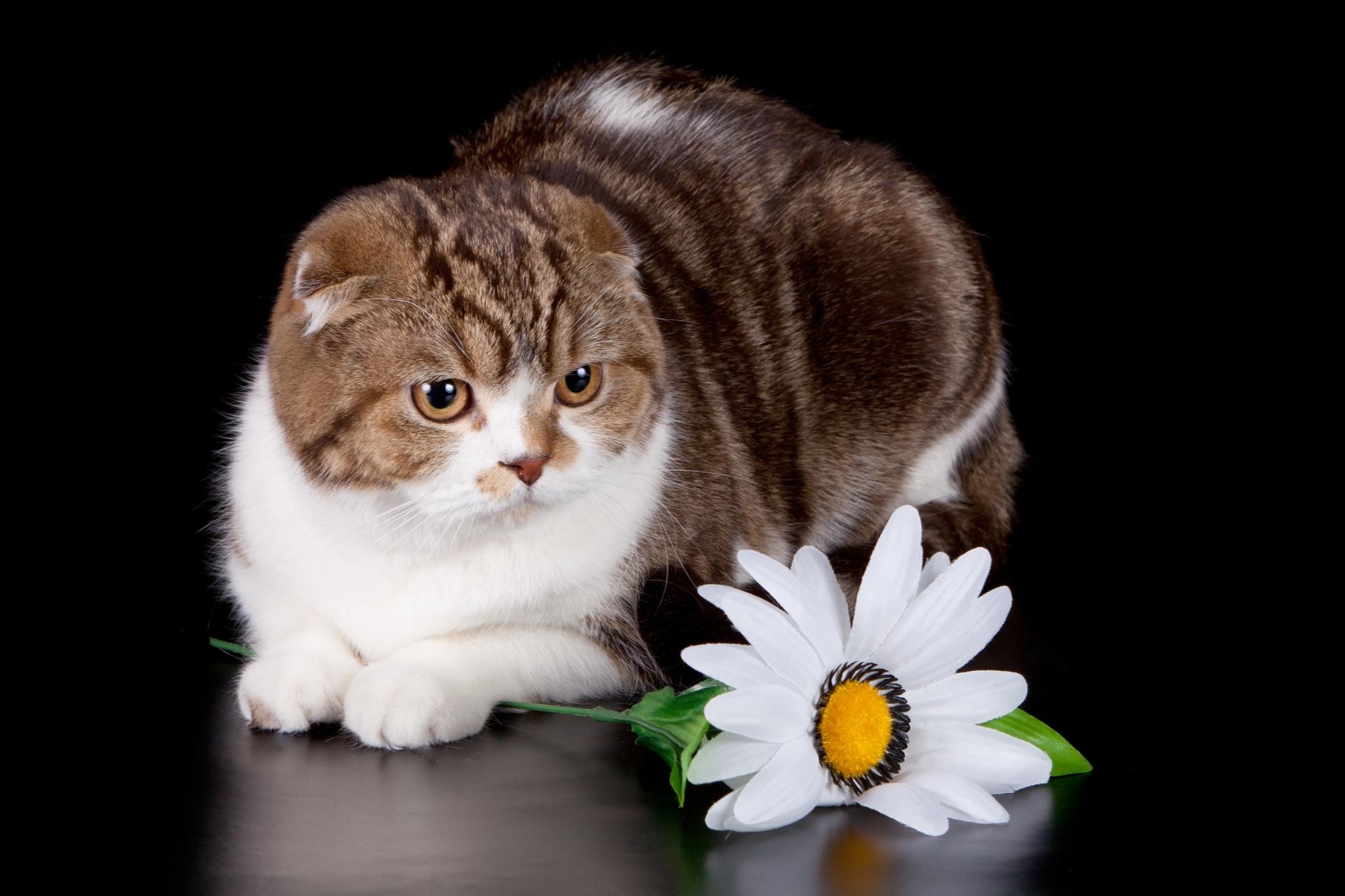 Кошки на открытках фото, князей прикольные