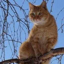 Мартовские коты в Москве