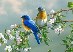Картинки по запросу встречаем птиц