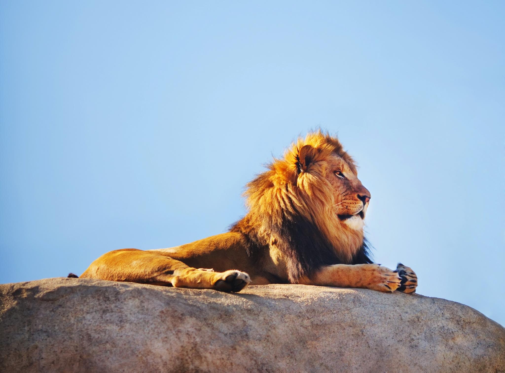Картинки с днем рождения для львов, картинки 1000