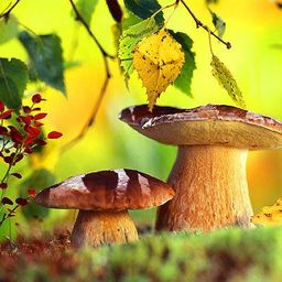 Где собирать грибы в подмосковье