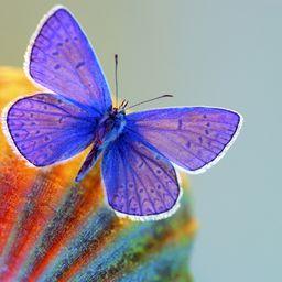 День Москвы под знаком бабочки