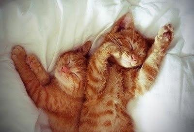 фото котов рыжих