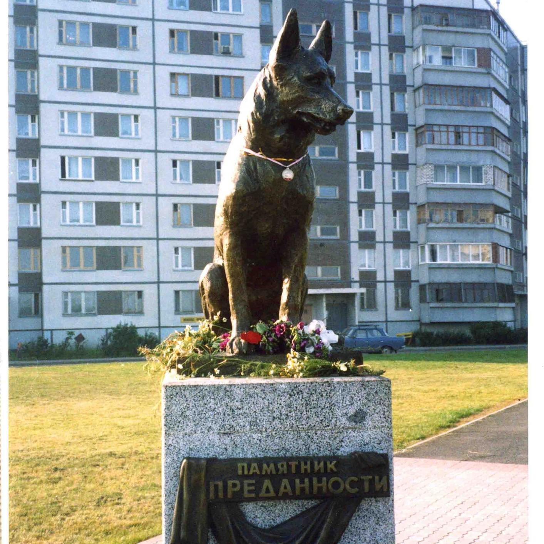 Песни о памяти собаке в тольятти
