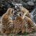 Фотовыставка «Обитатели Новосибирского зоопарка»