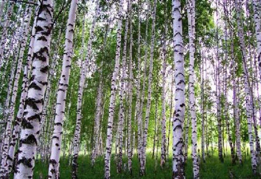 Картинки по запросу 9. Парк «Березовая роща»москва
