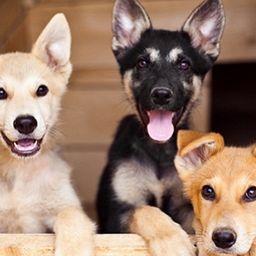Выставка собак «Домой!»