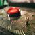 Квест в реальности «Красная кнопка»
