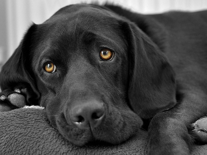 Благотворительная арт-ярмарка «Green пес»