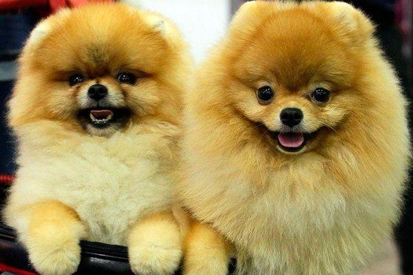 Выставка собак «Дельта-Пал»
