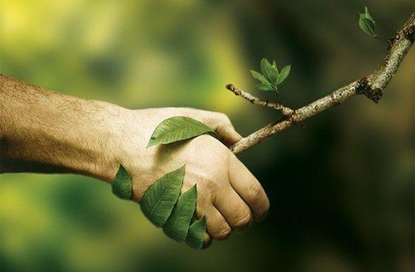 Закрытие фестиваля «Зеленый Петербург»