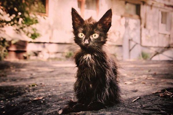 Выставка кошек, которые хотят домой