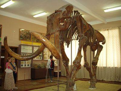 Новосибирск готовится к «Вечеру музеев»