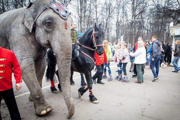 Парад животных