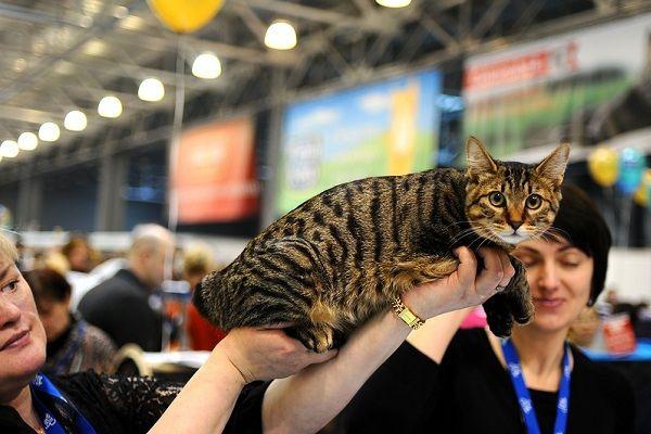 Выставка кошек «Кэтсбург»