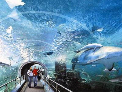 Океанариум в ТРЦ «РИО»