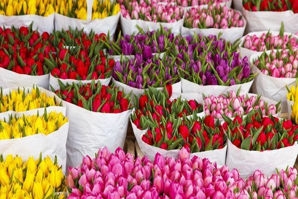 Купить свежие цветы недорого butikbuket24.ru
