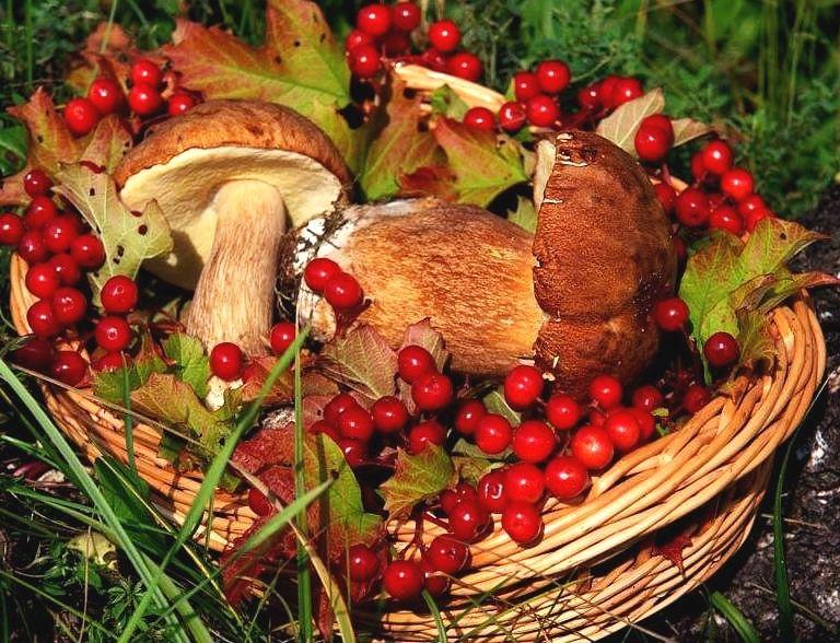 Украинцы смогут собирать дикорастущие ягоды и грибы в Белоруссии